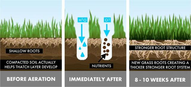 Aerating Your Lawn in the Fall