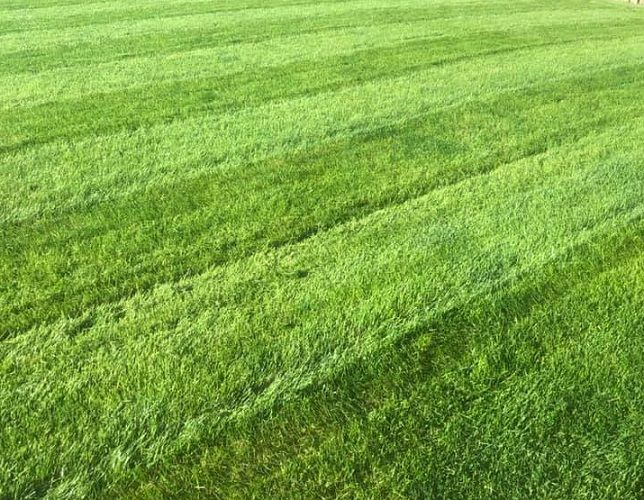 Lawn Care Tips for Rain Soaked Yards
