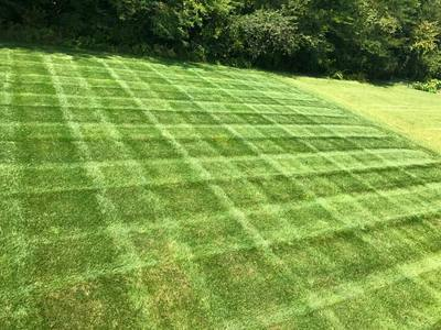 professional lawn care providers